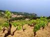 Dalmatia Wine Tour
