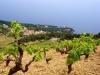 Wein & Gourmet